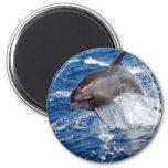 Dolphin Adventure 2 Inch Round Magnet