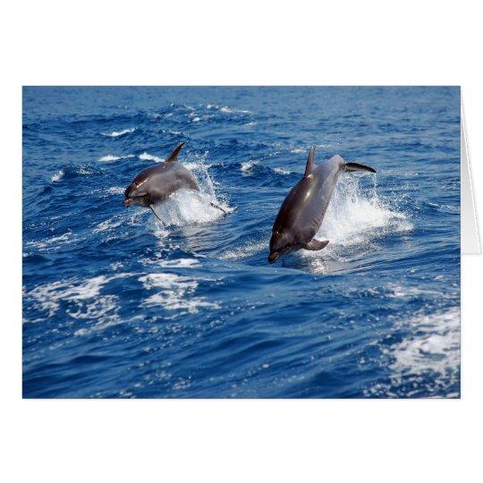 Dolphin Adventure Card