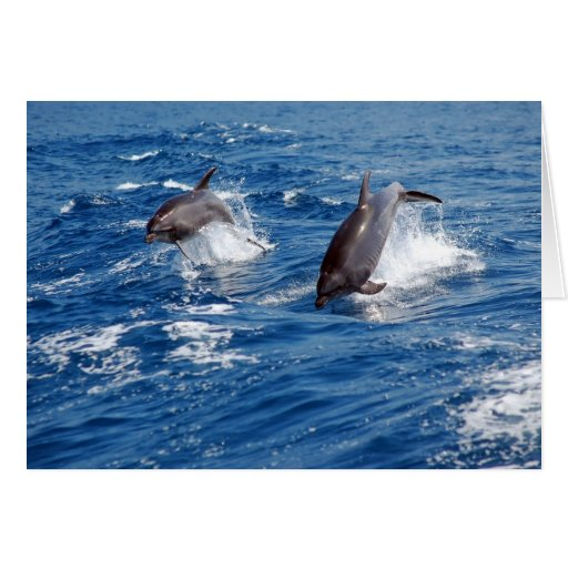 Dolphin Adventure Greeting Card