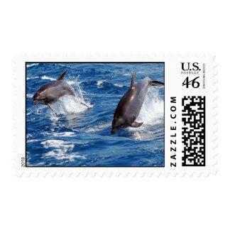 Dolphin Adventure Postage