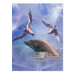 Dolphin and diving birds postcard