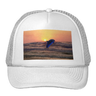 Dolphin at sunset hats