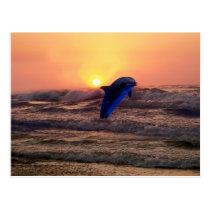 Dolphin at sunset postcard