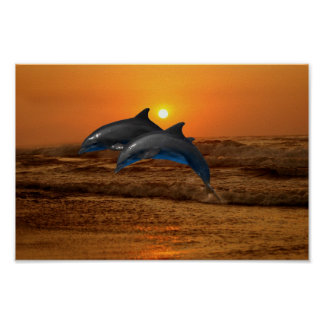 Dolphin at sunset poster