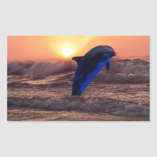 Dolphin at sunset rectangular stickers