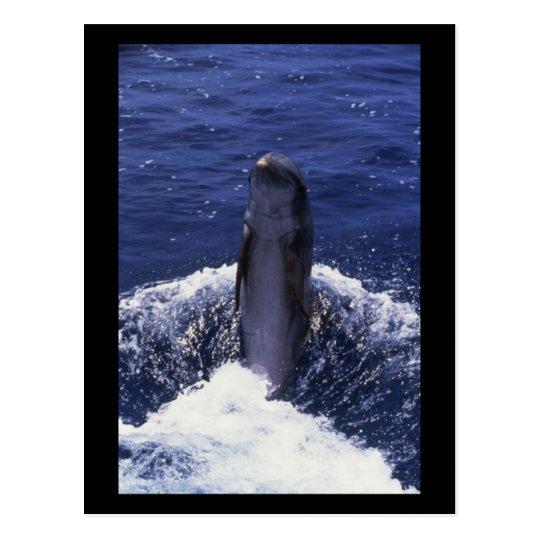 Dolphin Backwards Postcard