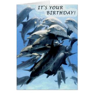 Dolphin birthday party card