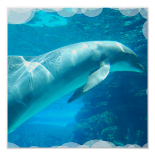 Dolphin Bubbles Poster