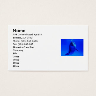 Dolphin Business Business Card