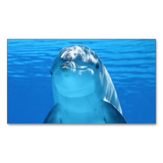 Dolphin Business Card Magnet