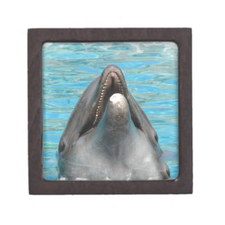 Dolphin Chatter Premium Jewelry Box