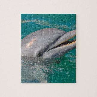 Dolphin Close Up Jigsaw Puzzle