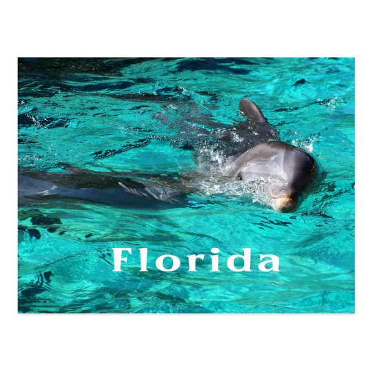 dolphin coming out of teal clear water florida.jpg postcard