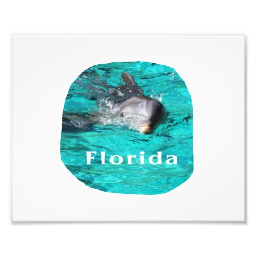 dolphin coming out of teal clear water florida photo