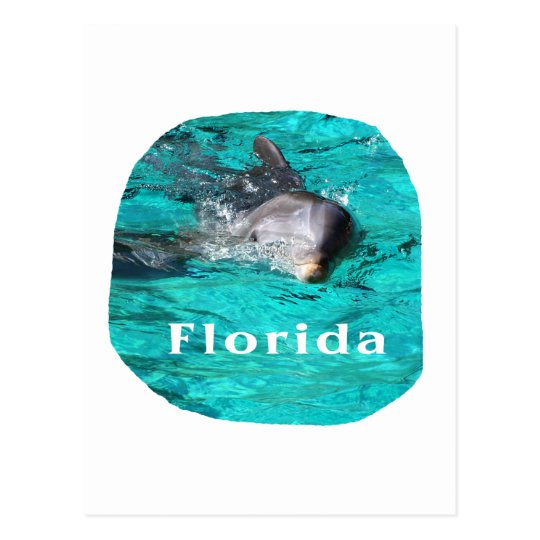 dolphin coming out of teal clear water florida postcard