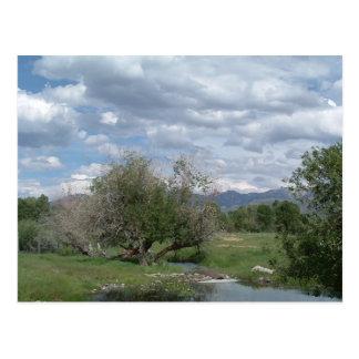 Dolphin Creek in June Postcard