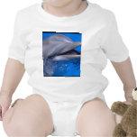 Dolphin Creeper