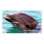 Dolphin Design Business Card