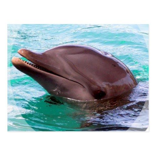 Dolphin Design Postcard
