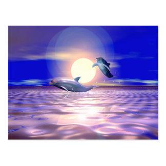 Dolphin Diversion Postcard