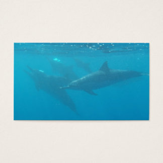 Dolphin diving company customizable business cards