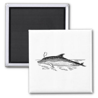Dolphin Drawing Refrigerator Magnet