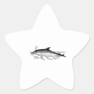 Dolphin Drawing Star Sticker