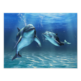 Dolphin Dream Poster
