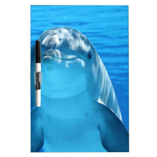 Dolphin Dry-Erase Board