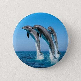 Dolphin Family Button