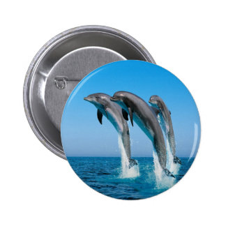 Dolphin Family Buttons