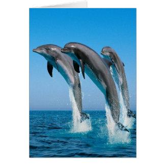 Dolphin Family Card