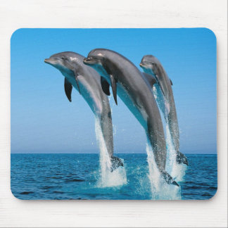 Dolphin Family Mouse Pad
