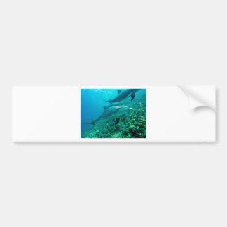dolphin fish marine ocean under water swim bumper sticker