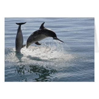 dolphin fish playing -blank card