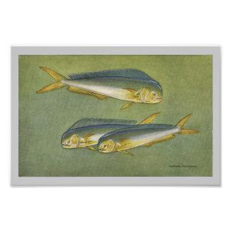 Dolphin Fish Vintage Fish Print Photo Print