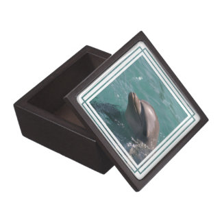 Dolphin Grinning Box   Premium Gift Boxes