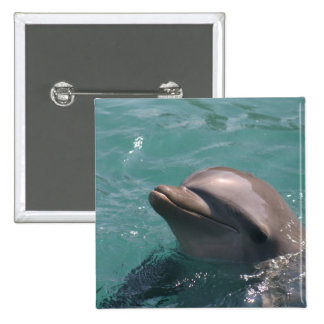 Dolphin Grinning  Button