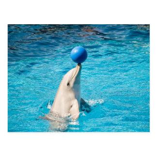 Dolphin having a ball postcard