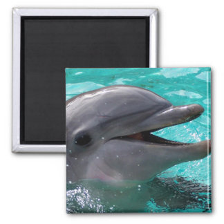Dolphin head in aquamarine water magnet