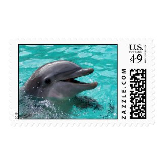 Dolphin head in aquamarine water postage stamp