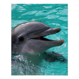 Dolphin head in aquamarine water poster