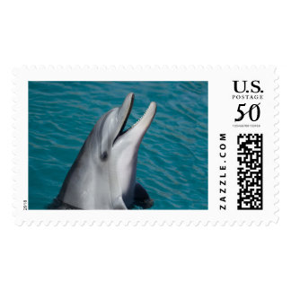 Dolphin Hello Postage Large