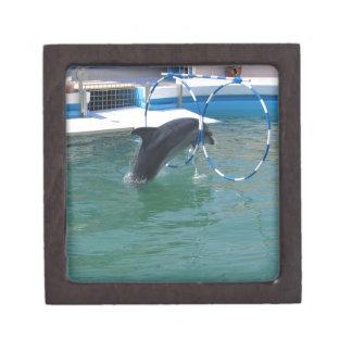 Dolphin Hoop Gift Box
