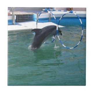 Dolphin Hoop Tile