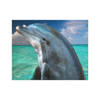 Dolphin in the Bahamas Canvas Print