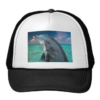 Dolphin in the Bahamas Trucker Hat