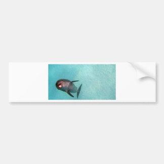 dolphin in the sea bumper sticker