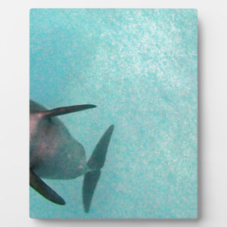 dolphin in the sea display plaques