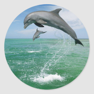 Dolphin in the wild jumping and playing classic round sticker